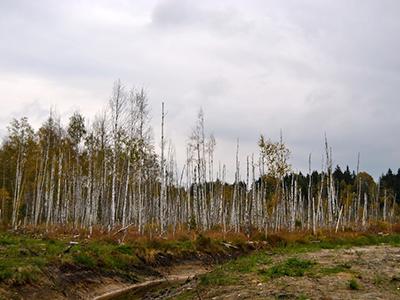 Metsa Maaparandussüsteemide Korrastamine
